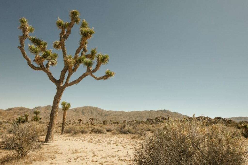 Joshua Tree National Park Review by Bill Bailey, Litchfield, IL